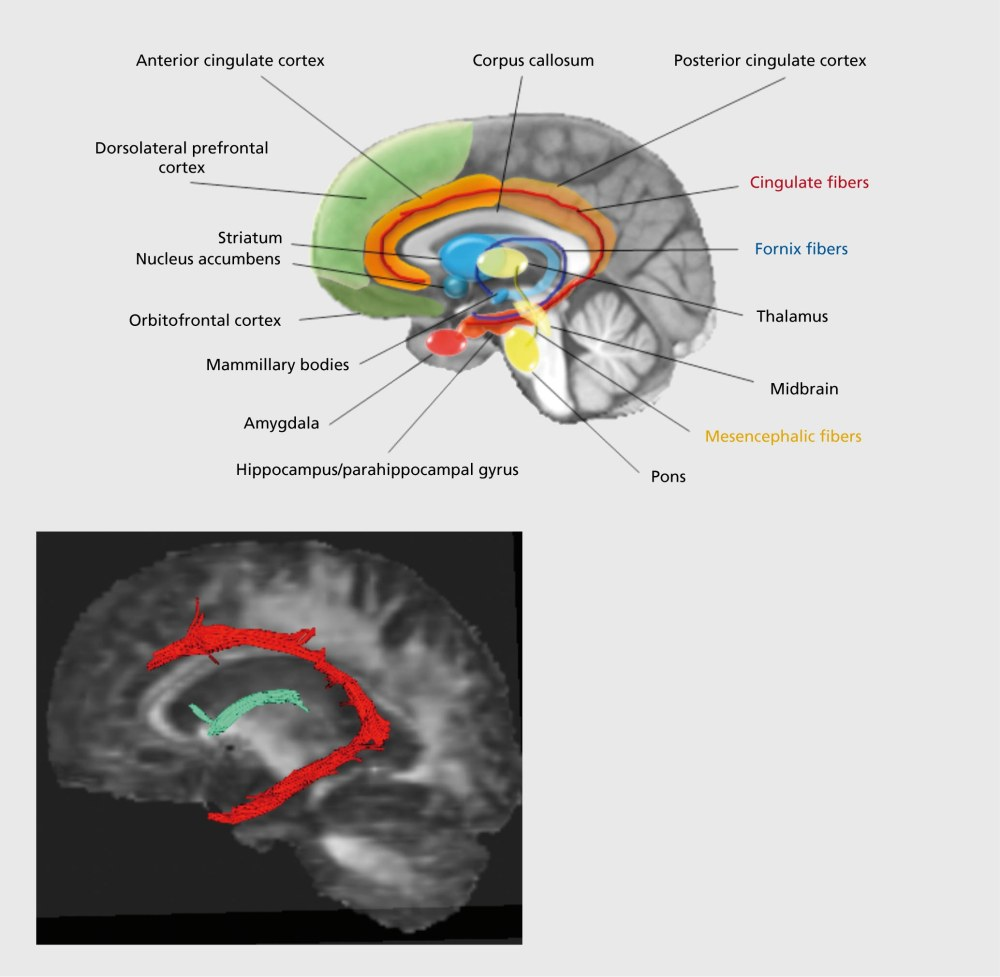 Map of the Emotional Brain (1/6)